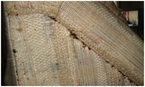signs of bed bugs in couch ridder pest control llc