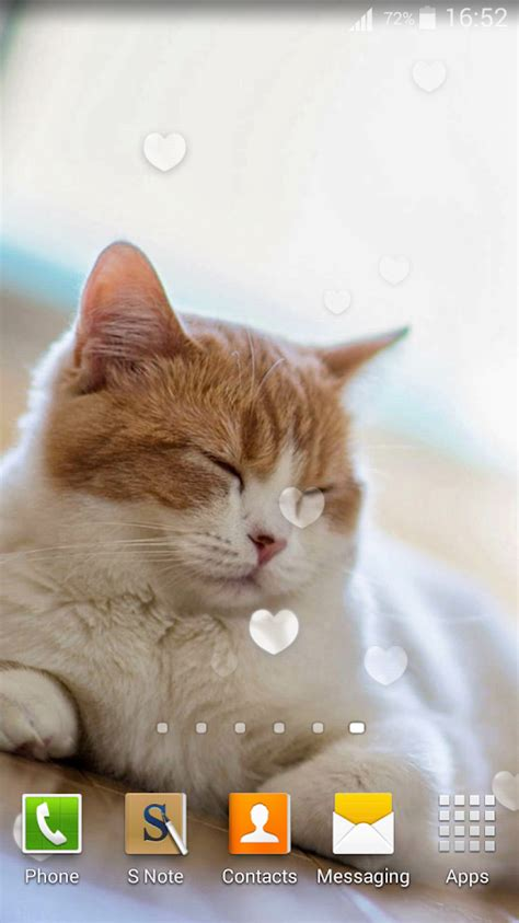 cute cat wallpaper live cute cats live wallpaper android apps on google play