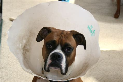 puppy cone the threat to the dollar as the world s primary reserve currency zero hedge