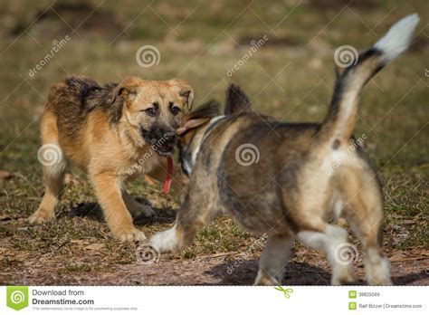 happy puppies net reaction puppy german shepherd stock photo puppy royalty free images breeds picture