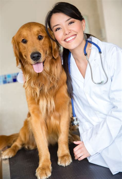 golden retriever aggression toward other dogs 5 things to help your feel more comfortable at the vet thedogtrainingsecret