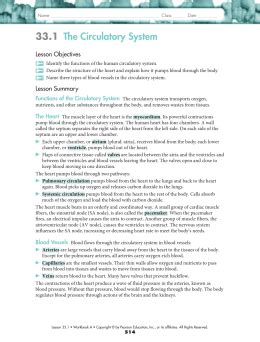 33 3 the respiratory system worksheet answers studylib net essys homework help flashcards research papers book report and other