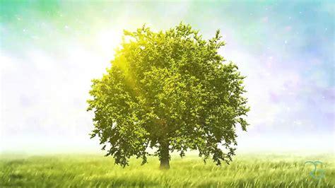 A Tree - tree animation rohollah gharib portfolio
