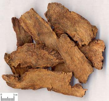 Suo Yang Ekstrak Songaria Cynomorium Herb Herba Cynomorii Extract Suo Yang Tcm Herbs Tcm Wiki