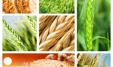 carbohydrates use in human balancing your carbohydrates maximizes function