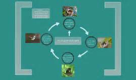 life cycle of a hummingbird by melissa hart on prezi