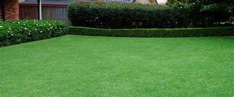 garden maintenance landscaping companies in uae dubai