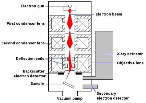 diagram of scanning electron microscope scanning electron microscope schematic diagram wiring