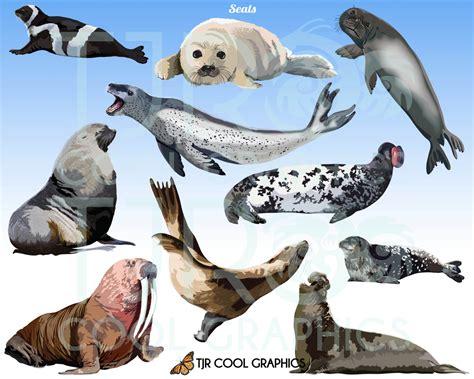 clip and seal seals digital realistic clip png printable commercial