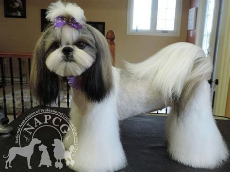 grooming styles for shih tzu asian fusion grooming yorkie blackhairstylecuts