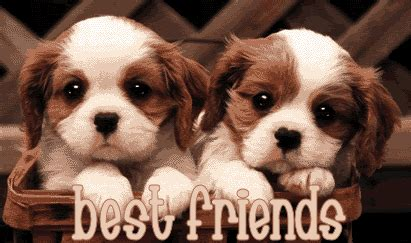 dogs best friend page 8 best friends graphics glitters and images on jhocy