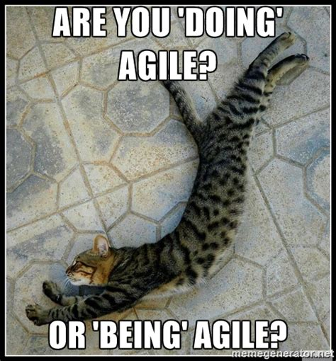 Agile Meme - agile coach some thoughts on agility
