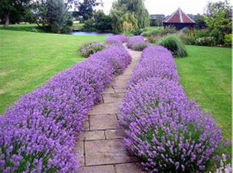 Landscaping With Lavender 7 Garden Design Ideas Lavender Garden Ideas