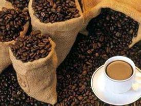 Srijaya Luwak Cofee Premium Bean benefits of luwak coffee beans in kopi luwak jpw coffee