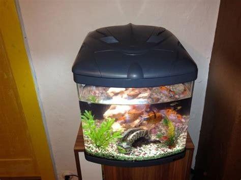 60 liter aquarium zum verkauf in maxh 252 tte haidhof fische