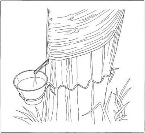 rubber tree coloring page draw tip tuesday drawing a wide ribbon using two pencils