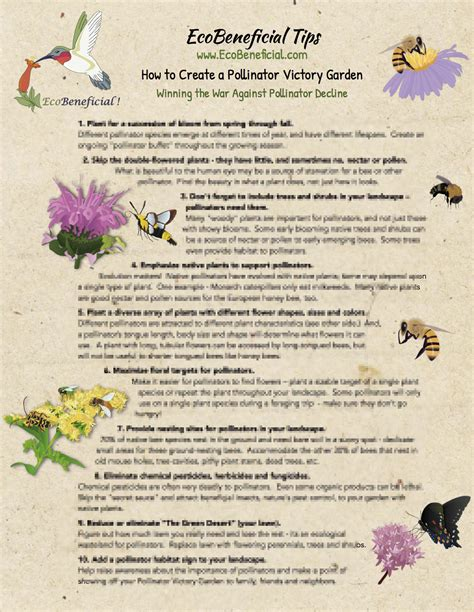 victory garden coloring pages how to create a pollinator victory garden 8 189 x11
