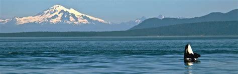 orcas island boat rental san juan island san juan safaris san juan island whale