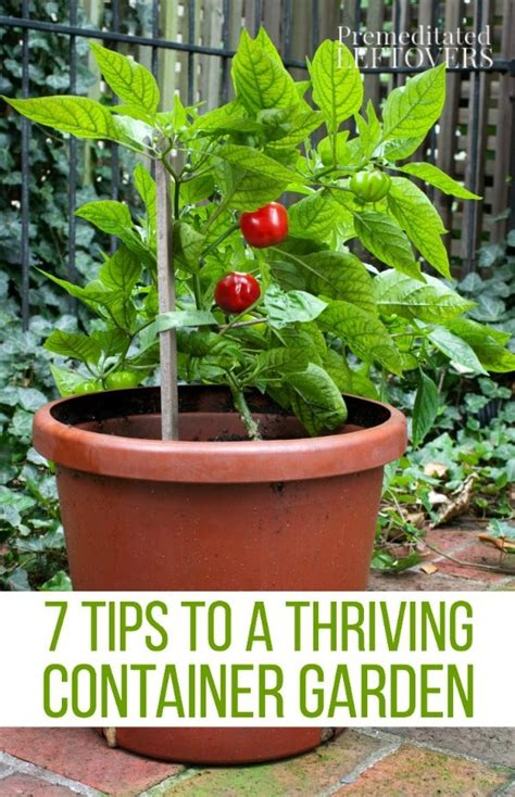 with disruption the 7 secrets to thriving on change so the best want to partner with you books tips for a thriving container garden