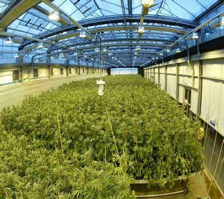 cannabis room temperature advantages of growing marijuana indoors grasscity magazine grasscity magazine