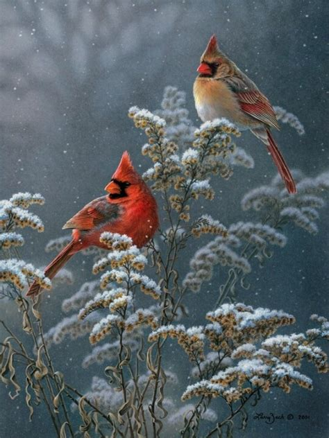 2 cardinals in the snow from the garden to the table