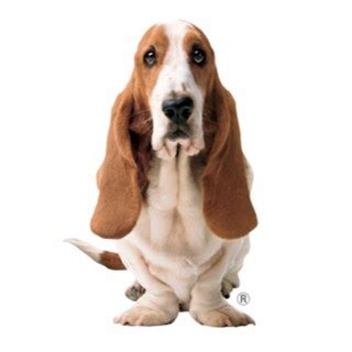 hush puppies promo code hush puppies rm10 promo code