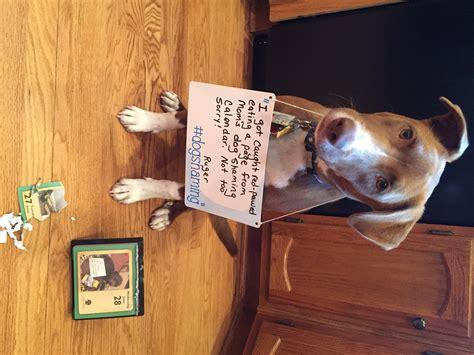 dog shaming desk dogshaming