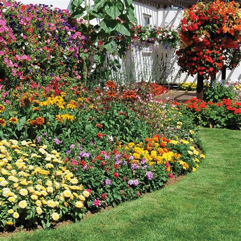bedding plants bedding plants j m services quot the good gardening company quot