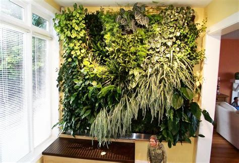 Living Wall Indoor Create An Indoor Living Wall Of Plants Bcliving