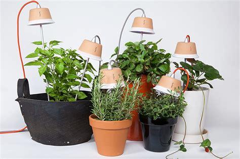 piante da appartamento con poca luce come coltivare le piante con poca luce in casa casafacile