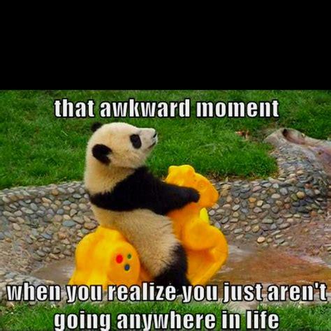 Cute Panda Memes - life panda meme loving it pinterest meme so true
