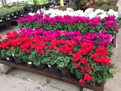 Lowes Garden Center Flowers by 15 Best Images About Lowe S Garden Center Displays On