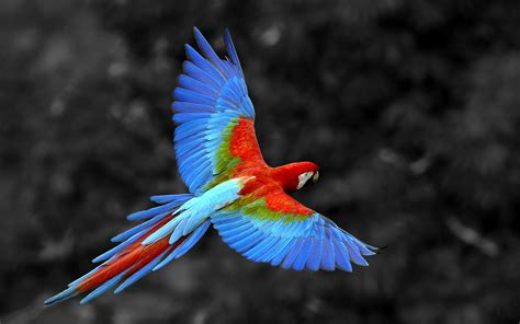 birds parrot scarlet macaw amazonia wallpapers 1920x1200