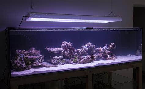 Sho Kuda 250 Ml 232 gal 880l planted marine aquarium aquaforest reef