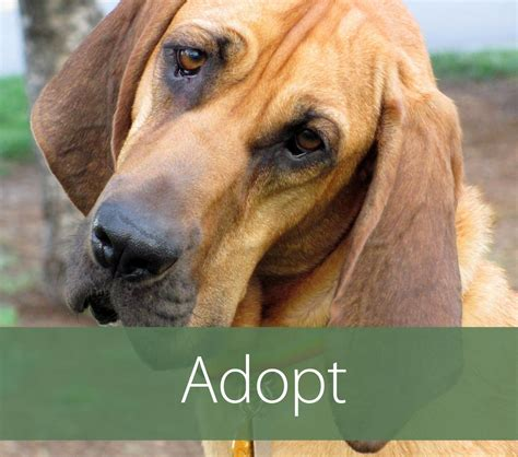 puppy shelters nyc helping hounds rescue