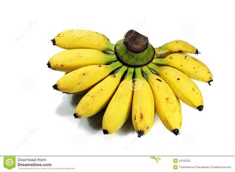 tiny banana little bananas related keywords little bananas long tail