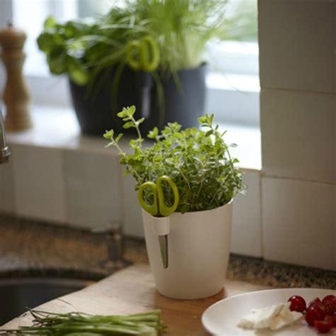 Aromates En Pot by Aromates En Pot Excellent Comment Planter Des Plantes