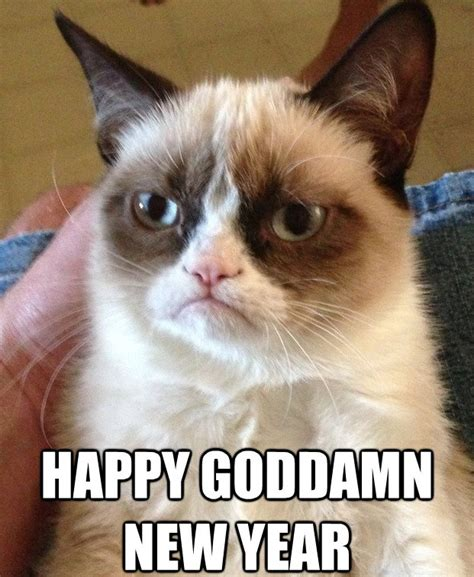 grumpy cat new year a grumpy new year to all echinacities answers echinacities