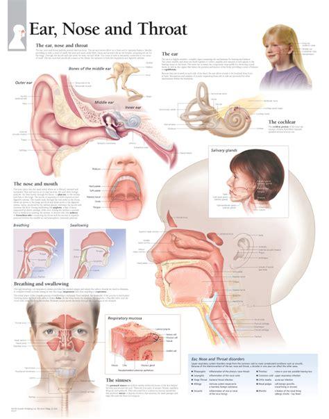 ear publishing ear nose throat scientific publishing