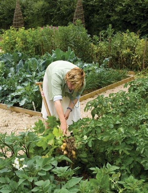 A Vegetable Garden From Scratch Starting A Vegetable Garden From Scratch Vegetable