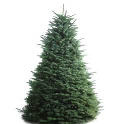 shop 6 7 ft fresh noble fir christmas tree at lowes com