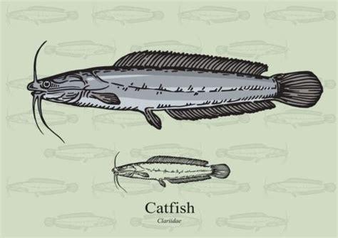 catfish hatchery layout pictures types of fish hatcheries fish hatchery