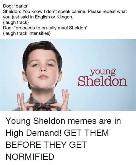 Young Sheldon Memes - dog barks sheldon you know i don t speak canine please repeat what you just said in english or