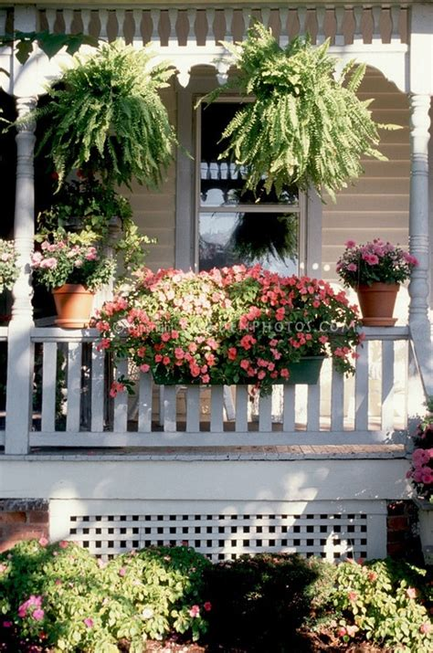 plants for the front porch gardening pinterest