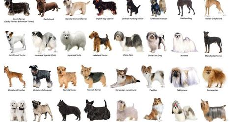 types of dogs chart small breeds chart jaddid hd wallpapers backgrounds images photos