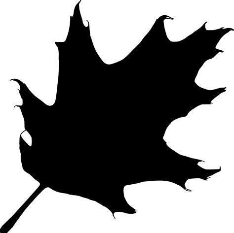 clipart donne oak leaf clip cliparts co