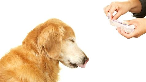 dexamethasone for dogs dexamethasone for dogs uses dosage and side effects dogtime