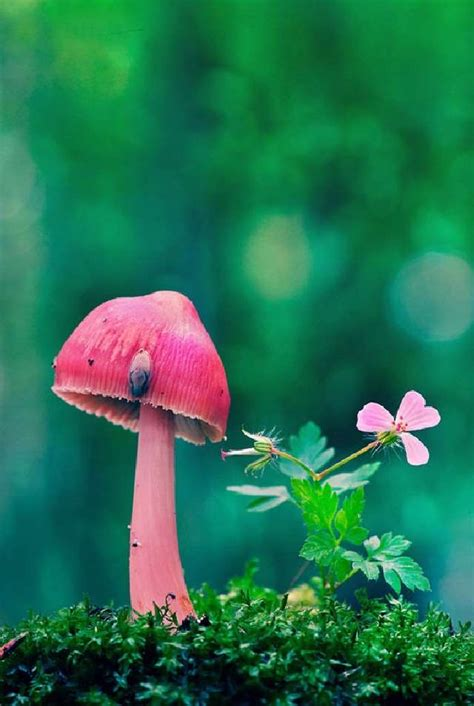 shangralafamilyfun shangrala s undersea restaurant shangralafamilyfun shangrala s most beautiful mushrooms