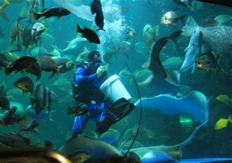 harga tiket seaworld ancol 2013 seaworld ancol wisata edukasi dunia laut tempat wisata