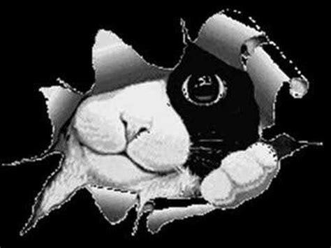 volevo un gatto nero testo volevo un gatto nero remix carmelita93 musica 232 anke